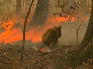 Bosbranden Australië (16).jpg