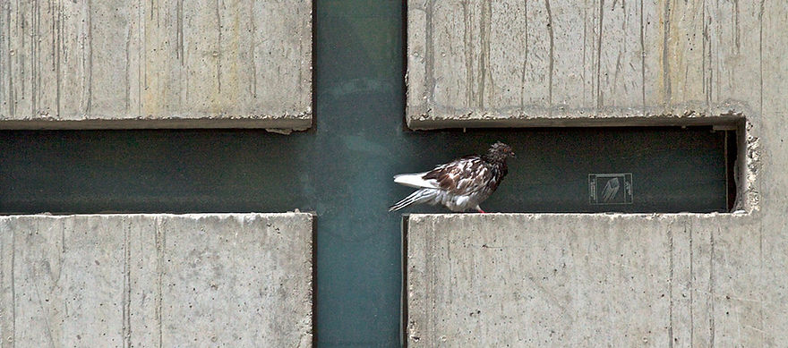 bird_6557.jpg
