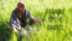 wheat-tares_980.jpg