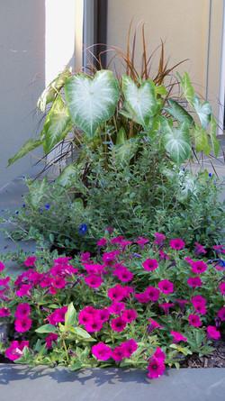 Annual and Perennial Garden Design