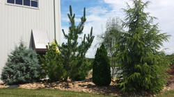 Themed Garden and Landscape Designs