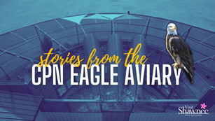 Incredible Stories from the CPN Eagle Aviary