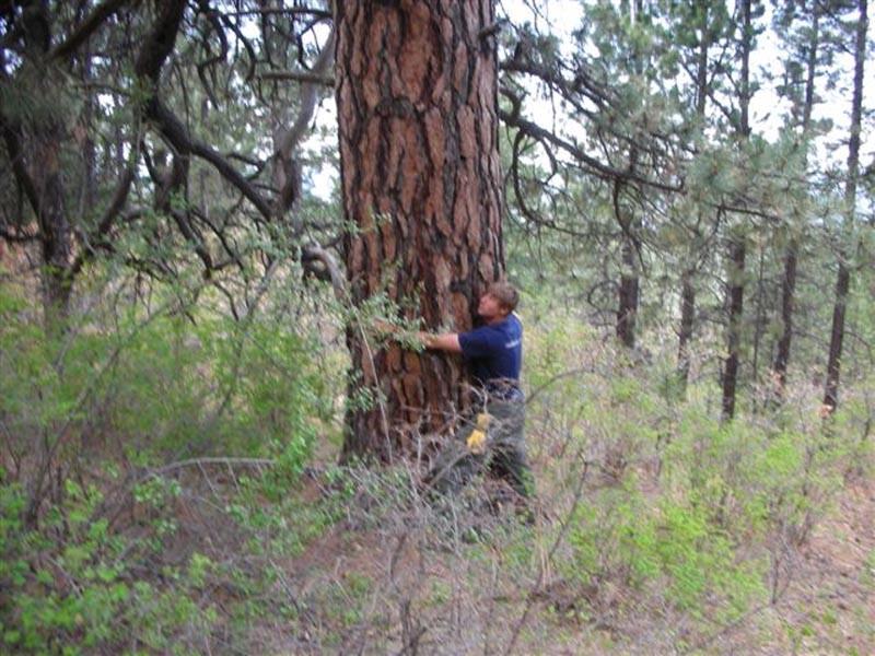 Big-Timber-at-Viveash-.jpg