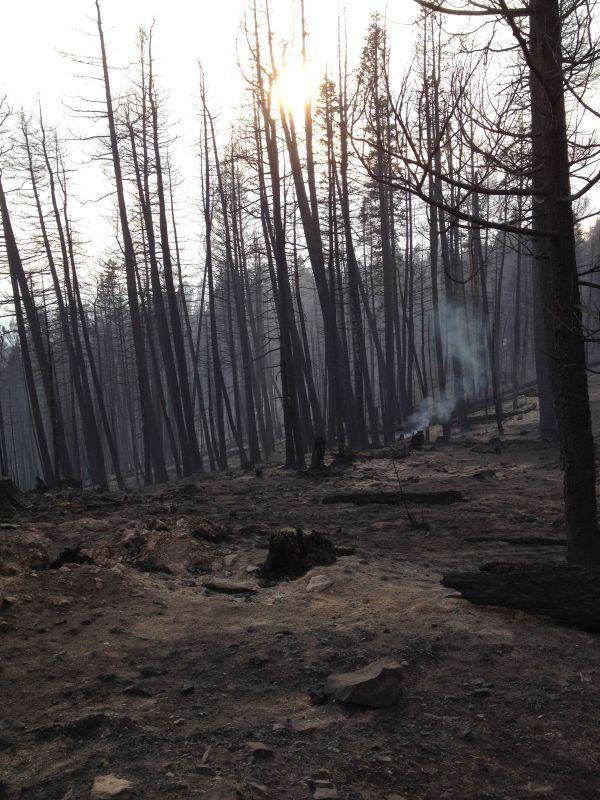 Viveash fire