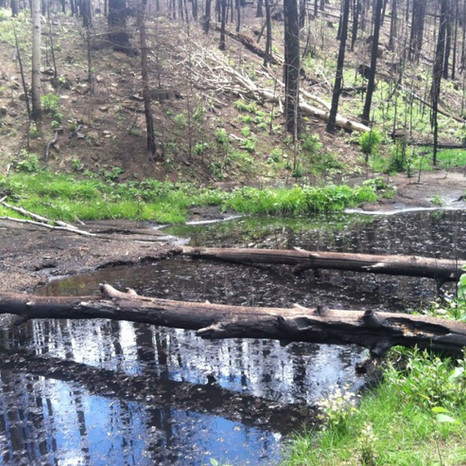 Our ponds after the mud slides