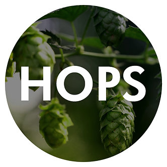 Whole Leaf Hops (choose your variety)