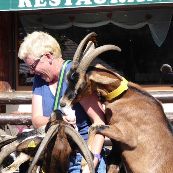 Feeding the goats in Les Lindarets