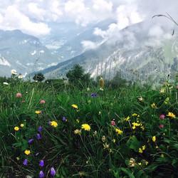 Summer alpine flowers