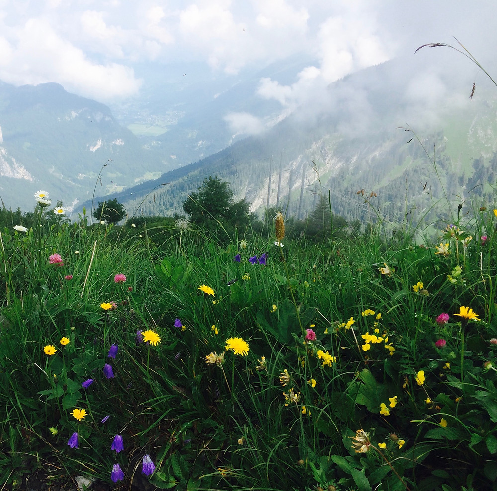 A meadow of wild alpine flowers overlooking the Cirque des Fonts