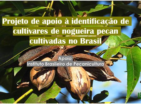 Projeto: Identificação de cultivares de nogueira-pecan no Brasil