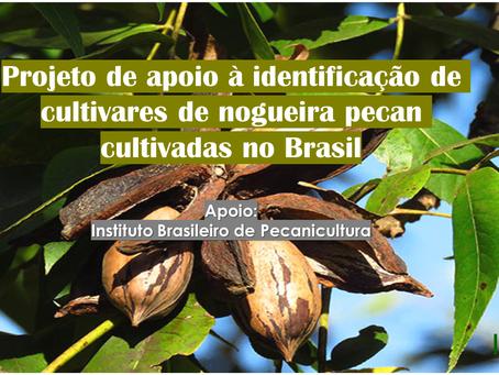 Apoie o projeto: Identificação de cultivares de nogueira-pecan no Brasil