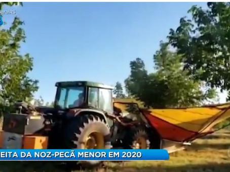 IBPEnaMídia: Safra menor em 2020.