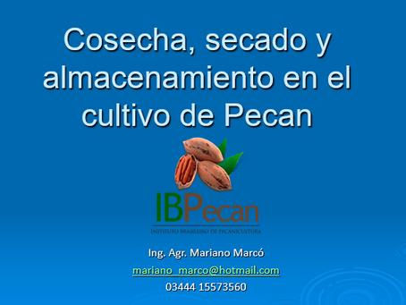 IBPecan realiza 1º dia de capacitação virtual sobre padronização para comercialização da noz-pecan