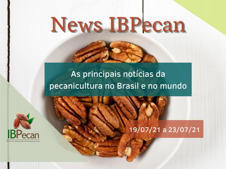 News semanal IBPecan: as notícias que são destaque na pecanicultura