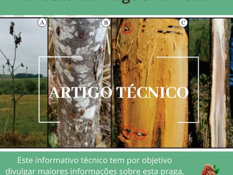Brocas da nogueira-pecã: duas espécies de esculitíneos são pragas no sul do Brasil