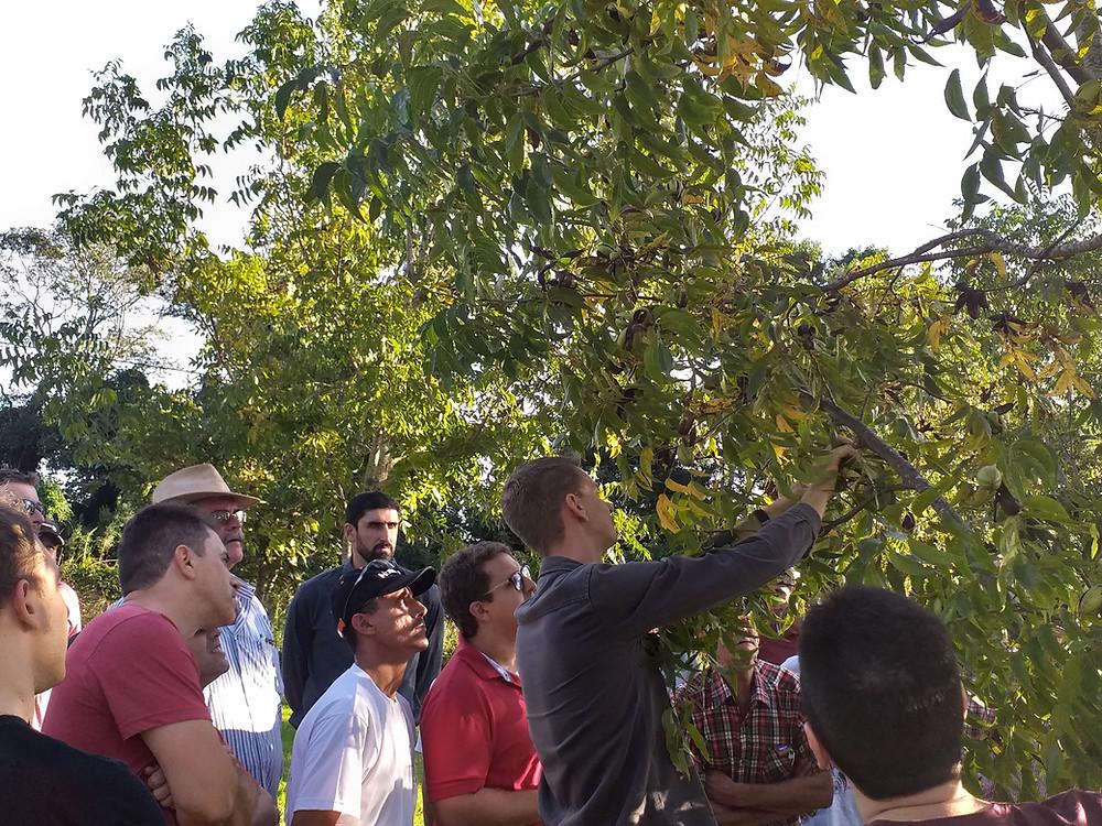 Curso sobre o Cultivo da Nogueir Pecan em Santa Maria