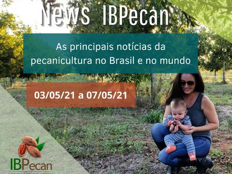 News IBPecan: as notícias que são destaque na pecanicultura
