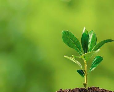 Estudos avançam no detector de nutrientes das plantas