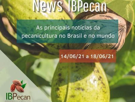 News semanal IBPecan:as notícias que são destaque na pecanicultura
