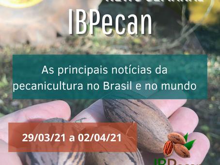 Pecan News - IBPecan