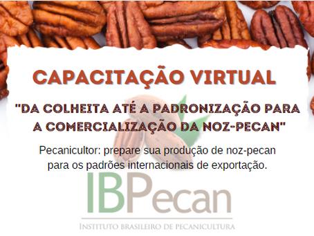 IBPecan - Capacitação virtual : Da colheita até a padronização para a comercialização da Noz-Pecan