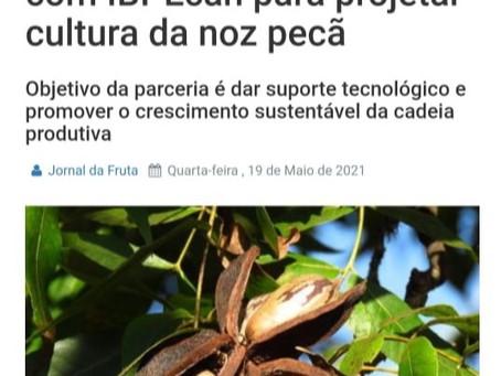 IBPecan assina acordo com Embrapa para projetar cultura da noz pecan