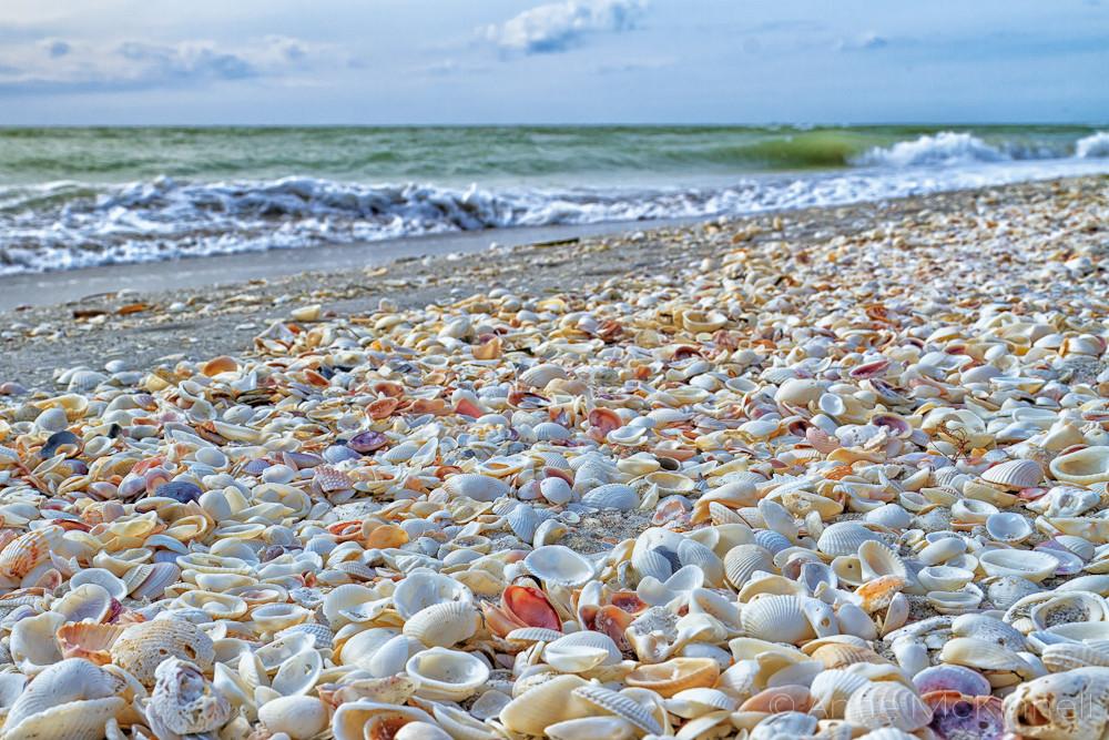 Millions of Shells along the coast of Sanibel Island