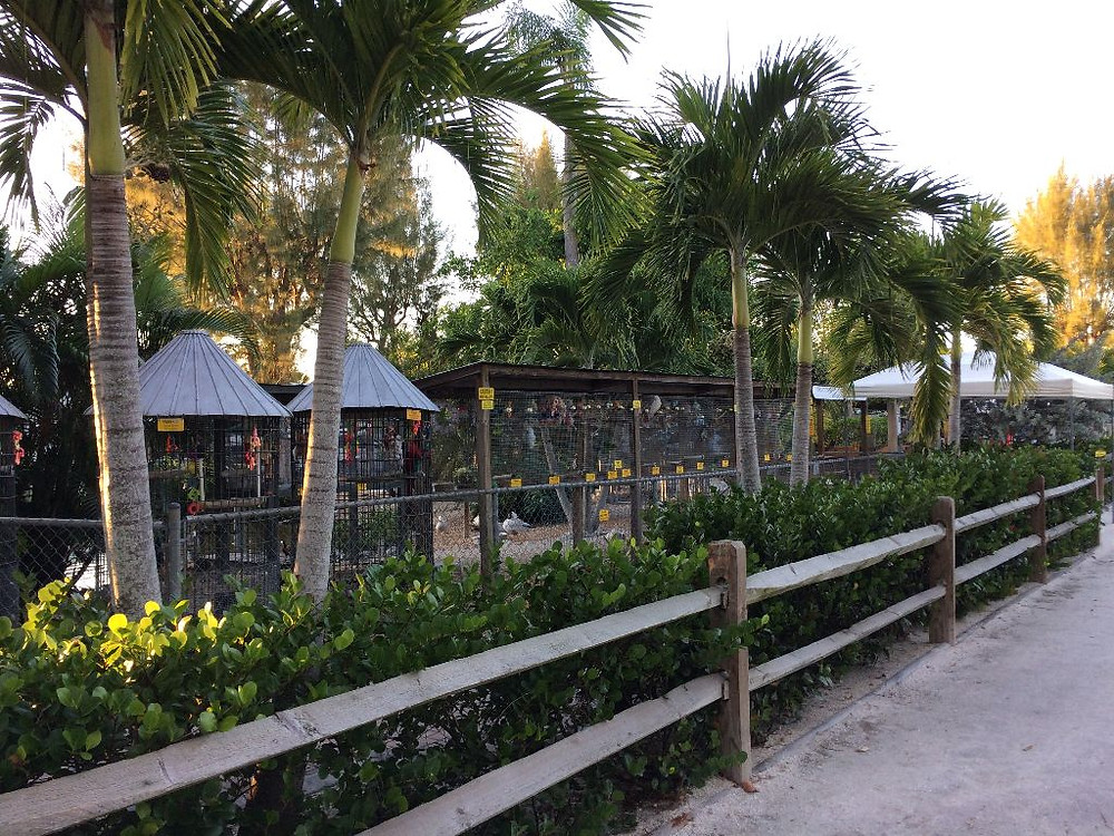 Overview photo of the Periwinkle Park Aviary in Sanibel Island, FL
