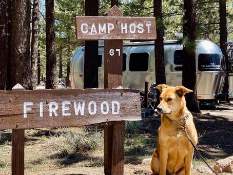 10 Tips For Dog Friendly RV Trips | Mid Florida RV