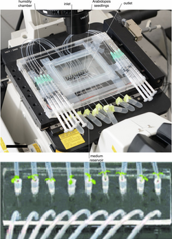 Microfluidics platform