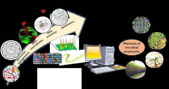 soilbacterium_rhizosphere_EMSLweb.jpg