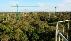 EucFACE Australia