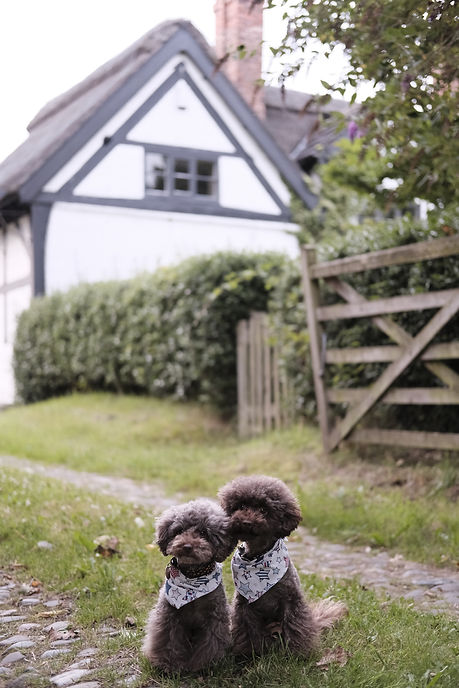 the-poodle-gang-385613-unsplash.jpg