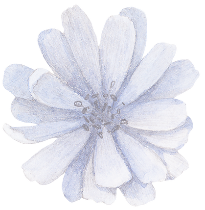 Blue%20Flower%20Front_edited.png