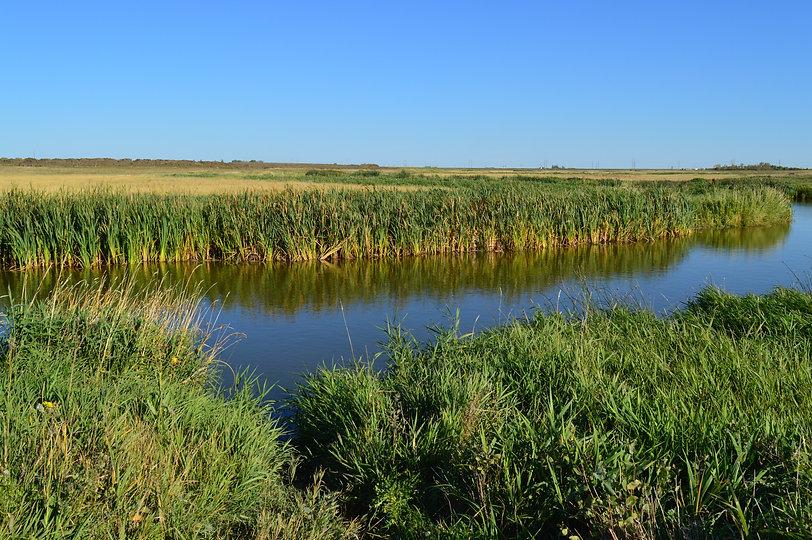 creek-937600.jpg