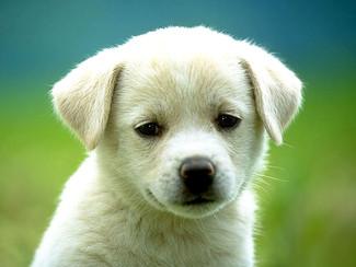 Recruiter: een hondenstiel?