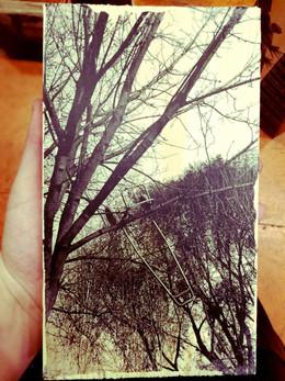 urban_jungle_14.jpg