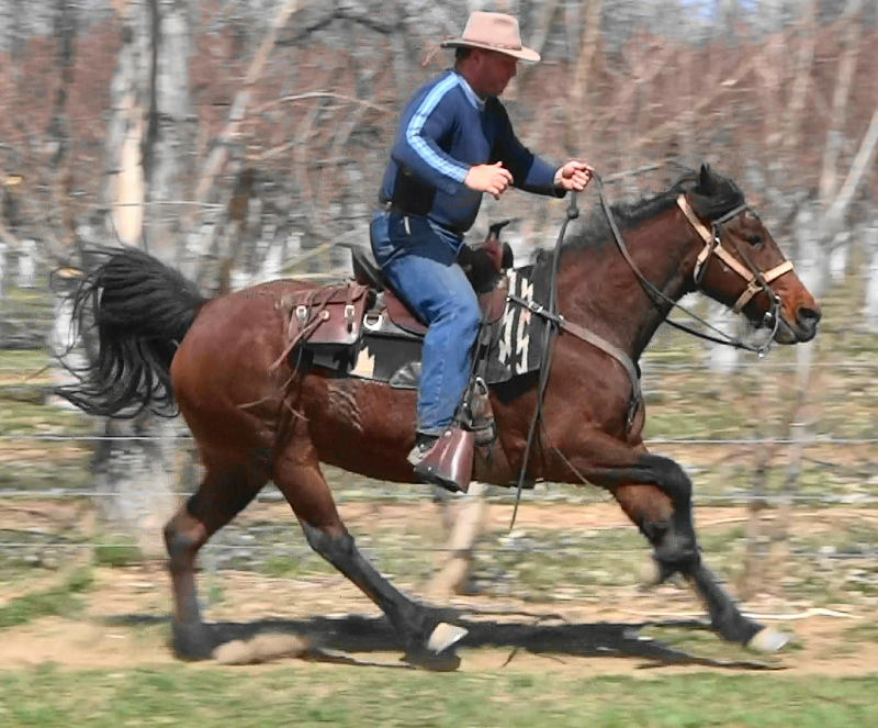 PrincessGalloping312b