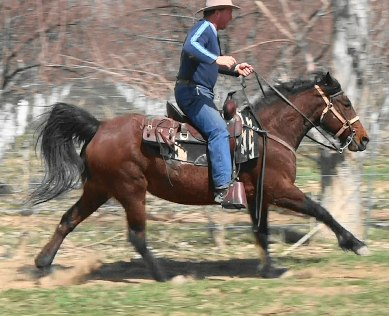 PrincessGalloping312c