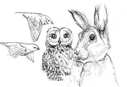 Ilustration Priska Kinder