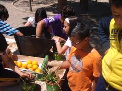 huerto mayo2012 008