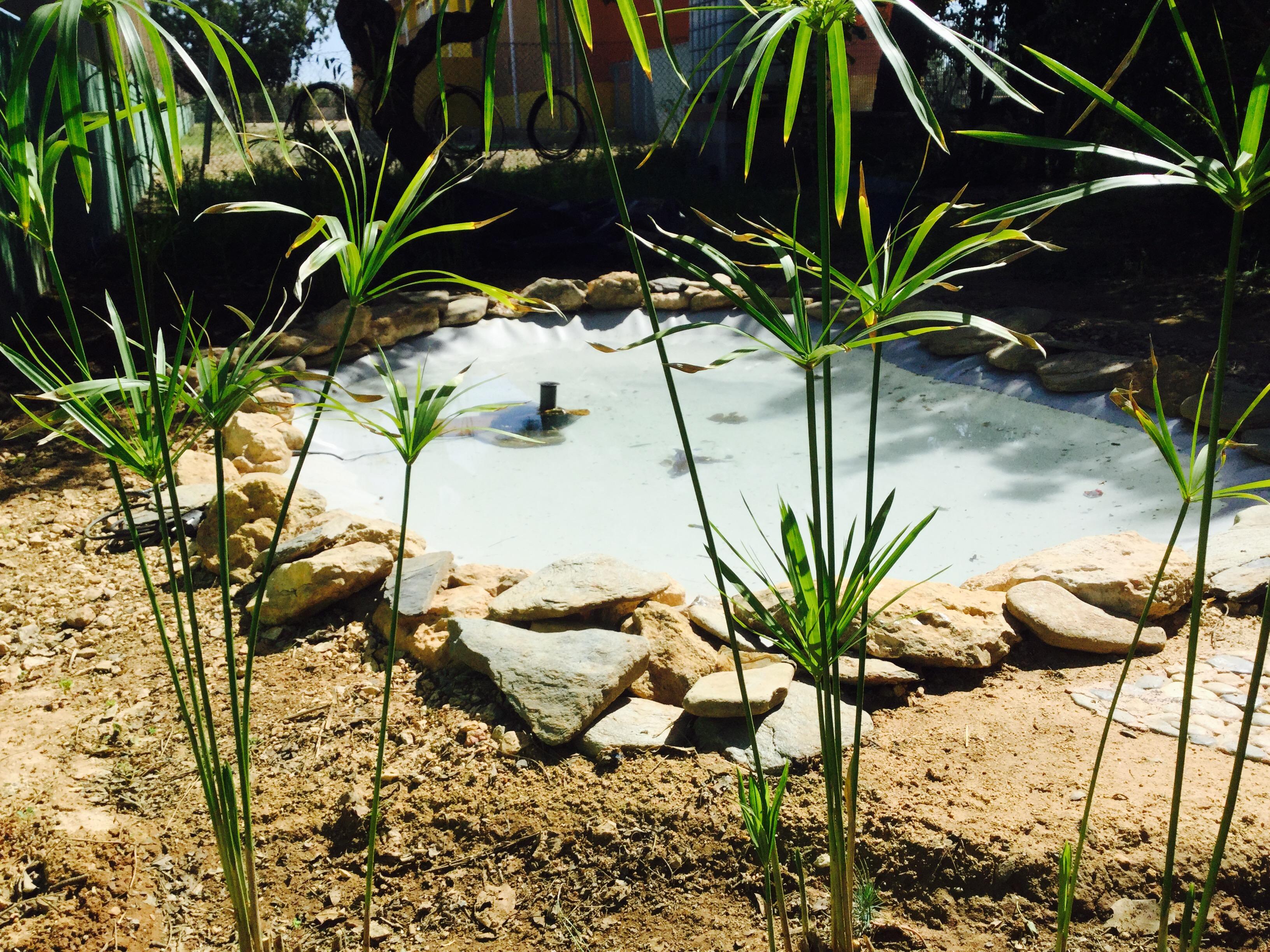 ¡El estanque ya está listo!