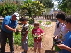 huerto mayo2012 014