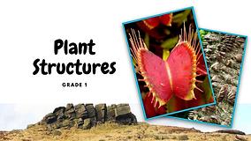 Plants - Structures Part 2 _Page_01.png