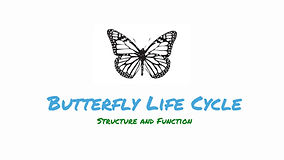 Butterfly Life Cycle Grade K main.jpg