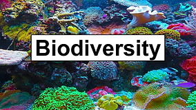 Biodiversity_Page_01.png