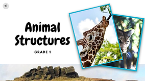 Animals - Structures Part 1 _Page_01.png
