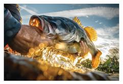 Central Florida Bass