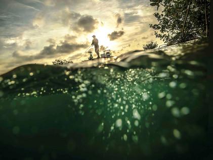 Islamorada, Florida Mangroves