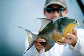 Parrotfish, Bahamas